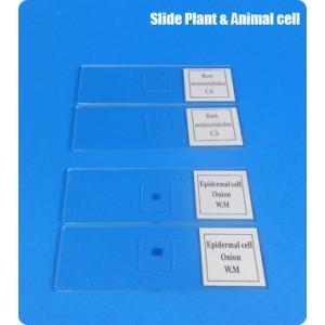 สไลด์ เซลล์พืชและสัตว์